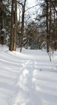 Footsteps end on path through the woods